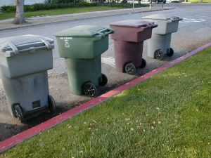 Trash Bins Awaiting Collection