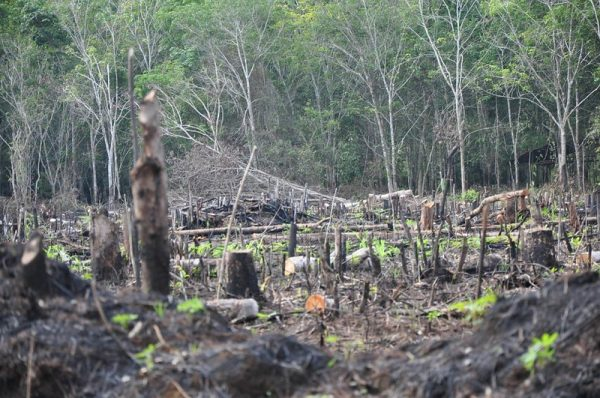 Deforestation site in Indonesia