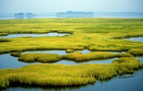 Coastal Wetlands at Parker River National Wildlife Refuge in Newburyport, MA