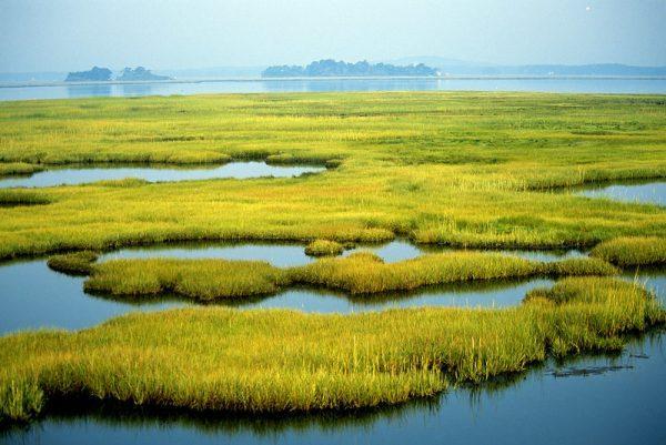 Coastal Wetlands at Parker River National Wildlife Refuge in Newburyport, MA